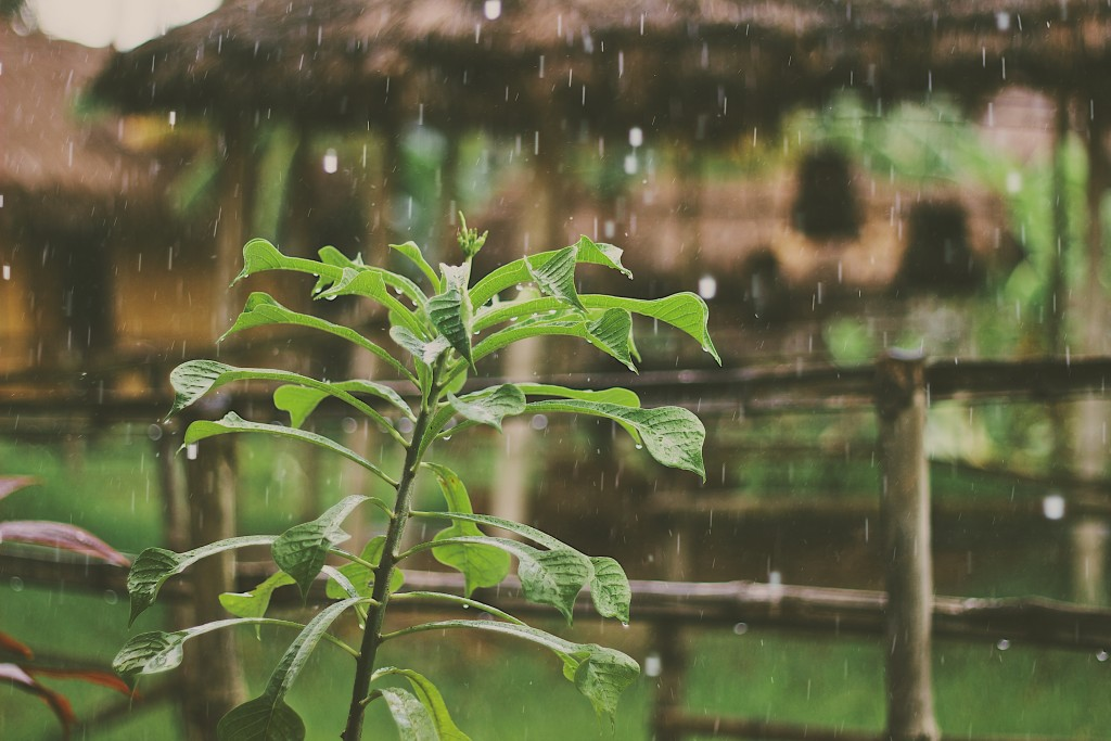 How to Prevent Mosquitoes After Heavy Rain or A Storm